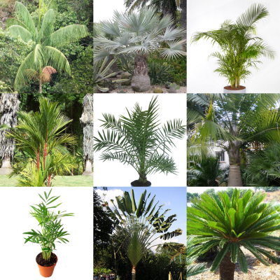 Palm Tree Seeds Mix – Seeds